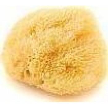 Φυσικό Σφουγγάρι Grass Νο1 1 τεμάχιο